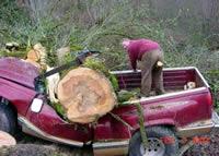Burley Boys Tree Service, arborist