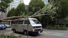 Burley Boys On Globe & Mail Discussing Trees Failing During The Heavy Rain & High Winds