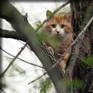Burley Boys Tree Service, Cats, rescue