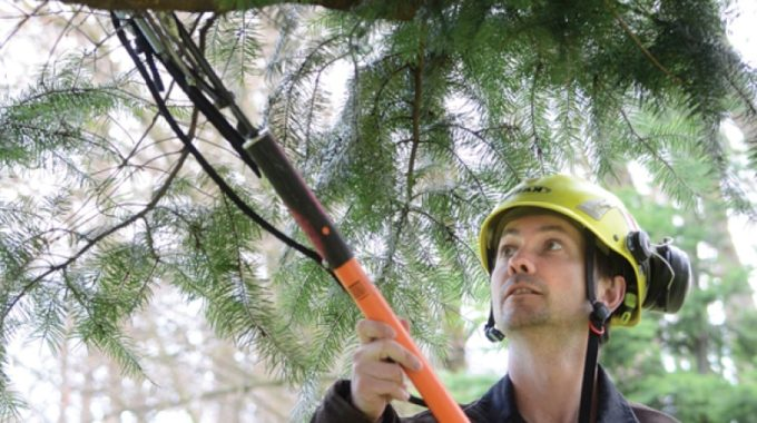 Burley Boys Tree Service, Pruning